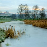 ...но пруд уже застыл :: Виктор (victor-afinsky)