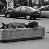 Собаки - цветы жизни :: Ольга Мальцева