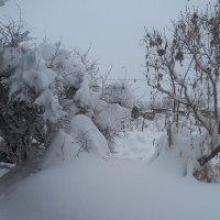 Первый  снегопад :: людмила токмакова