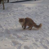 Кот или кошка? :: Ольга Кривых