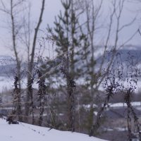 Берега реки Сок зимой. :: Мира Туркина