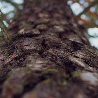 Дерево в лесу :: Сергей Долганов
