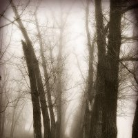 Туман :: Алла Рыженко