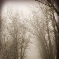 Туманная аллея :: Алла Рыженко