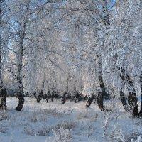Берёзки в белых шубках :: Татьяна Аистова