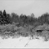 Затеряны в лесу! :: Владимир Шошин