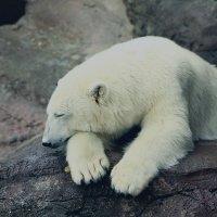 Животные Московского Зоопарка :: Дария Курьянова