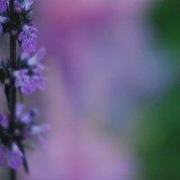 цветы :: Наталья Рогалёва
