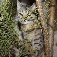 Кошка :: Ольга Якименко