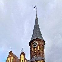 Кафедральный собор :: ник. петрович земцов