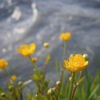 цветок у воды :: оксана ка