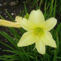 Flowers :: Gintaras Aleksandravicius