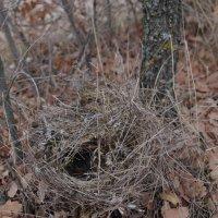 птичье гнездо :: İsmail Arda arda