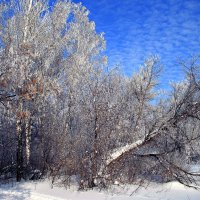 Красавица зима :: Евгений Юрков