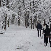 В зимней сказке! :: Владимир Шошин