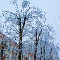Снежные пальмы :: Игорь Герман