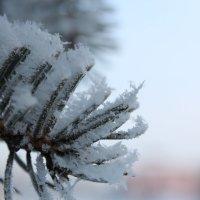 Кудесница зима :: Сергей Н