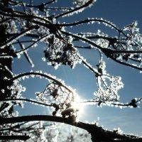 Зимушка зима :: Надежда Алексеенко