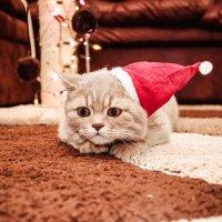 Новогоднее настроение*! :: Alexandra Kot