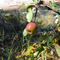 наливное яблочко :: Анна Носарева