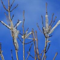 Причуды Зимы :: wearekis wearekis