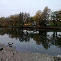 Осенняя погода :: Anastasia Furs