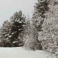 снежное одеяло :: Сергей Гуменюк