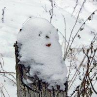 Старичок-лесовичок. :: Наталья Соколова