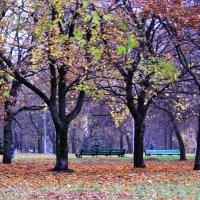 краски осени :: Светлана З