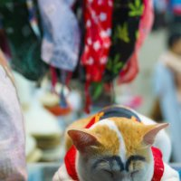 Кот в Тайланде :: Олег Ганжа