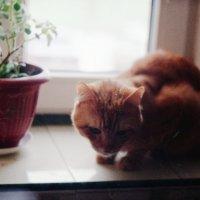 Котик :: Сурикат Сусликов