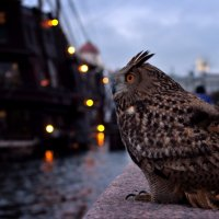 Питер. Умная птица и корабль.. :: Елизавета Вавилова