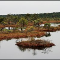 кемерские болота :: Viktor Makarov