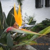 Растение :: Olga С