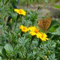 Бабочка :: Наталья Ватав