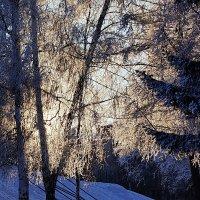 Зимнее солнце. Иней :: Виктор Четошников