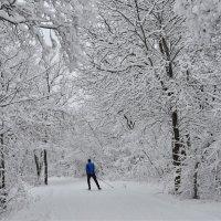 В сказку на лыжах :: Дмитрий Зотов