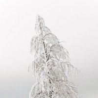 Одинокое дерево :: Александр Капустин