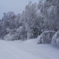 зима 2014 :: валерий телепов