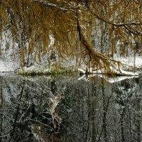 Гатчинский парк :: алекс алекс