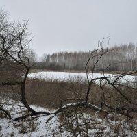 старое озеро :: Андрей ЕВСЕЕВ