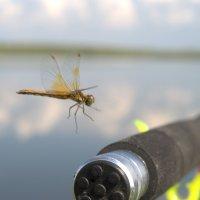 На рыбалке :: Илсур Загитов