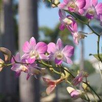 орхидея :: Свет Какоткина