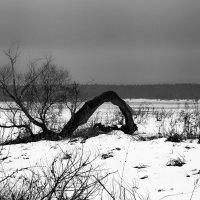 Изгибы веток в графике зимы :: Олег Кашаев