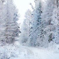 зима :: Роман Кондрашин