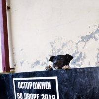 Пёс :: Maxim Smiridi