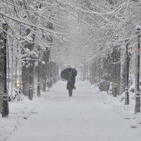 снегопад :: Maxim Smiridi