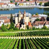 Виноградные склоны Вюрцбурга возле реки Майн (Бавария, Германия). :: Валентина Потулова
