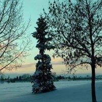 Зима. :: Ель Ель