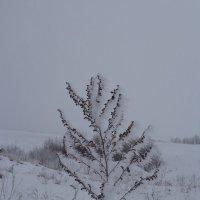 зима :: Olga Pavlova